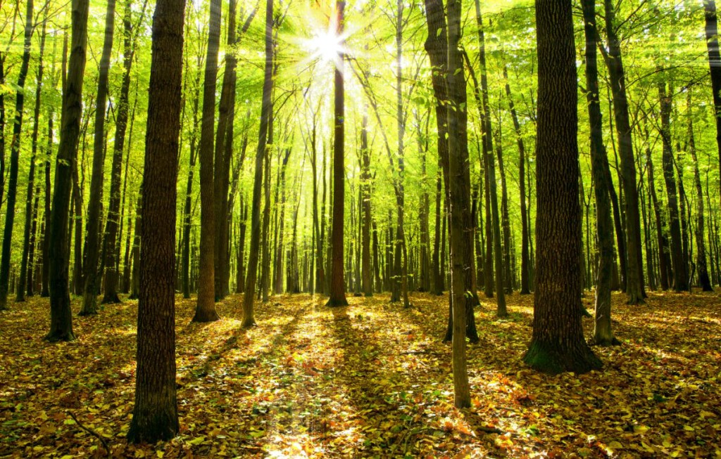 forest_image